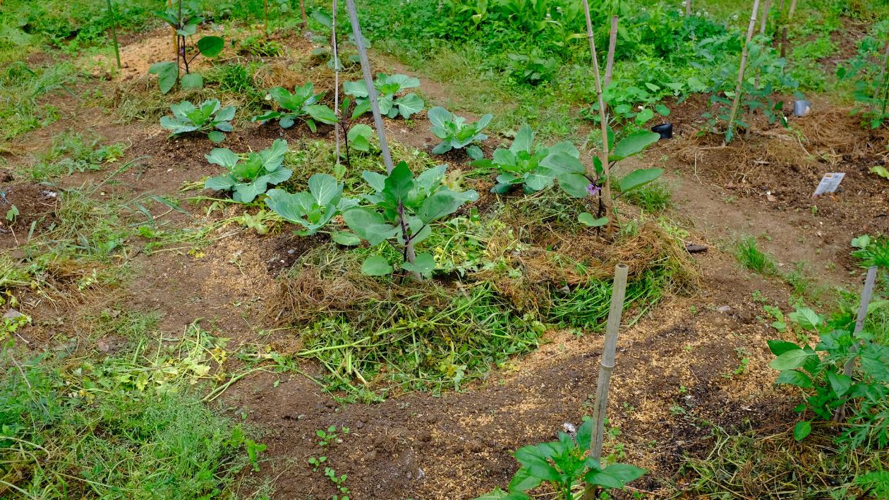 household irrigation